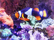 Clownfish And Coral Print by Susan Savad