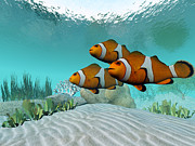 Yellowtail Clownfish Prints - Clownfish Print by Corey Ford