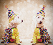 White Terrier Art - Clowning Around by Edward Fielding