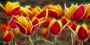 Morphed Metal Prints - Cluisiana Tulips Fractal Metal Print by Peter Piatt