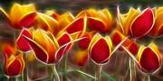 Cluisiana Tulips Fractal Print by Peter Piatt