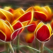 Morphed Prints - Cluisiana Tulips Triptych Panel 2 Print by Peter Piatt