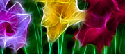 Subtle Colors Prints - Cluster of Gladiolas Triptych Panel 3 Print by Peter Piatt