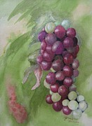 Grapes Drawings - Cluster of grapes by JoAnne Hessong