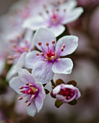 Cluster Of Flowers Photo Posters - Cluster of spring flowers.... Poster by Christine Kapler