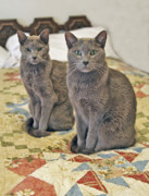 Cat Pictures Posters - Clyde and Bonnie Poster by James Steele