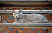 Cat Photography Prints - Clydes Rest Time Print by James Steele
