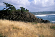 Red Photographs Photos - Coast of Oregon by Robert  Torkomian