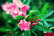 Apalachicola Prints - Coastal blooms Print by Toni Hopper