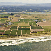 San Mateo County Prints - Coastal Farmland Print by Eddy Joaquim