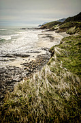 Rocky Beach Posters - Coastal Grass Poster by Heather Applegate