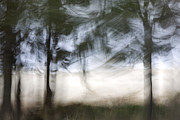 Painterly Photos - Coastal Pines by Carol Leigh