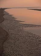 Hunting Island Posters - Coastal Strand at Dawn on Hunting Island Poster by Anna Lisa Yoder