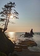 Oregon Coast Prints - Coastal Sunstar Print by Mike Reid