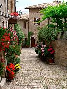 Hilltown Photos - Cobblestone street with flowers by Deanna Keahey