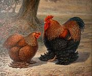 Hen Paintings - Cochin Chickens by Hans Droog