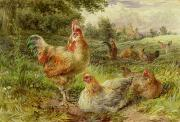 Rooster Paintings - Cochin China Fowls by George Hickin