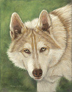 Wolves Pastels Framed Prints - Cochise Framed Print by Teresa LeClerc
