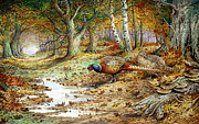 Autumn Woods Painting Prints - Cock Pheasant and Sulphur Tuft Fungi Print by Carl Donner