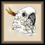 Cockatoo Drawings Framed Prints - Cockatoo Framed Print by Crystal Rolfe