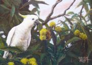 Tree Leaf Pastels Framed Prints - Cockatoo in a chestnut tree Framed Print by Leigh Rust
