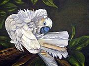 Cockatoo Originals - Cockatoo Preening by Anne Kushnick