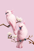 Cute Cockatoo Framed Prints - Cockatoos And Magnolia Framed Print by BJI/Blue Jean Images