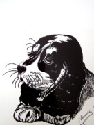 Puppy Drawings - Cocker Spaniel by Nancy Rucker