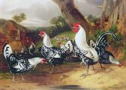 Farm Scenes Posters - Cockerels in a Landscape Poster by William Joseph Shayer