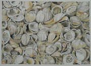 Sheds Pastels Framed Prints - Cockle Shells Framed Print by Teresa Smith