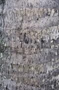 Rough Ridge Prints - Coconut Palm Bark Print by Brent Black - Printscapes