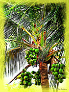 Husks Posters - Coconut Palm Poster by Joan  Minchak