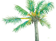 Florida Drawings - Coconut Palm Tree by Tina McCurdy