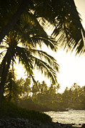 Survival Prints - Coconut Palm Trees On The Coast Print by Jad Davenport