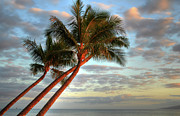 Coconut Palms Prints - Coconut Palms Print by Kelly Wade