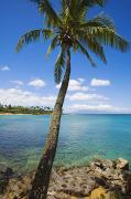 Napili Bay Framed Prints - Coconut tree Framed Print by Ron Dahlquist - Printscapes