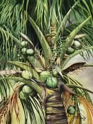 Art Medium Prints - Coconuts Print by Mary Lucas Faustine - Printscapes