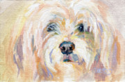 Lavendar Prints - Cody Dog Print by Kimberly Santini