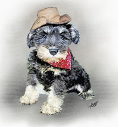 Miniature Schnauzer Puppy Digital Art - Cody Wyo by Tom Schmidt