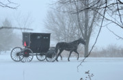 Amish Buggy Photos - Cold Amish Morning by David Arment
