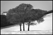 Snow Scene Prints - Cold and Bare. Print by Terence Davis