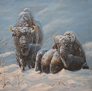 Buffalo Paintings - Cold Blue by Scott Thompson