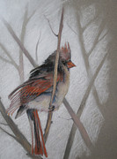 Winter Scene Pastels Metal Prints - Cold Cardinal Metal Print by Flo Hayes