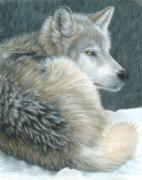 Wolves Drawings - Cold Evening by Carla Kurt