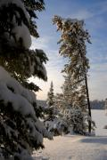 Bwcaw Metal Prints - Cold Morning on Boot Lake Metal Print by Larry Ricker