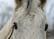 Forelock Photos - Cold Outside by JAMART Photography