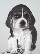 Cute Dog Pastels - Colin by Kim Shayler