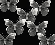 Butterfly Photographs Posters - Collection Poster by Lourry Legarde