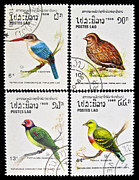 Stamp Collection Art - Collection of birds stamps. by Fernando Barozza