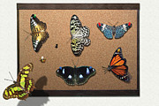Lepidopterist Posters - Collector - Lepidopterist - My Butterfly Collection Poster by Mike Savad